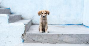 Abandono animal y albergues