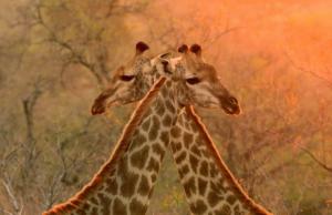 Ansiedad por separación en animales