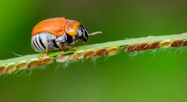 La sabiduría de los insectos y su función vital en el mundo
