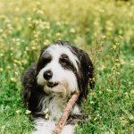 Amanaturiscomunicación con animales